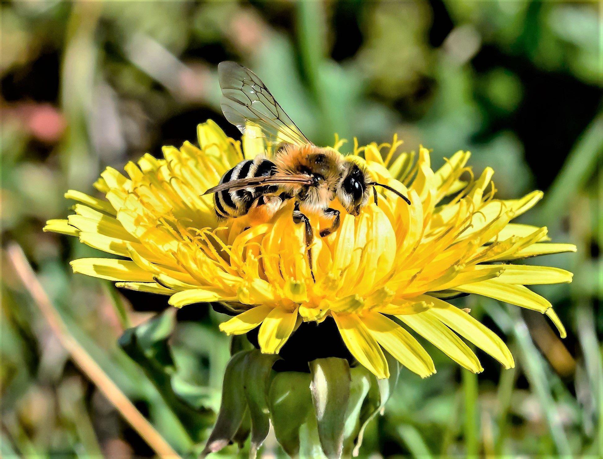 abeille nature fleur miel bio environnement ecologie