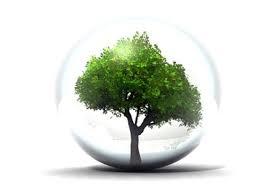 environnement arbre bulle écologie