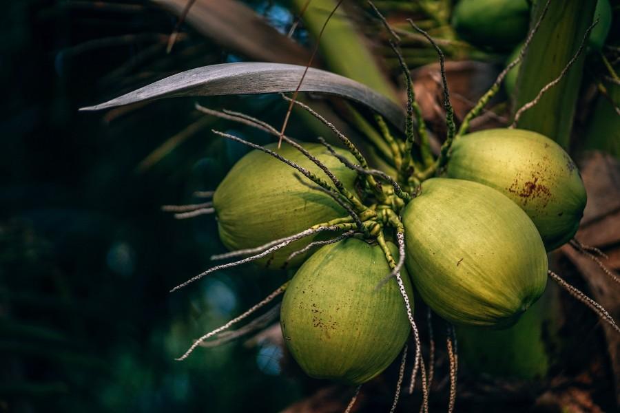 Tout ce que vous devez savoir sur le sucre de coco